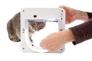 Kat laten wennen aan kattenluik