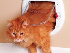 Kattenluik grote kat