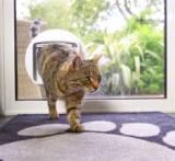 Kattenluik in glas